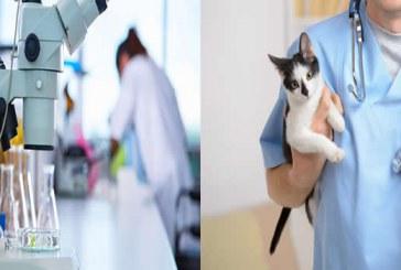 علوم آزمایشگاهی یا دامپزشکی؟